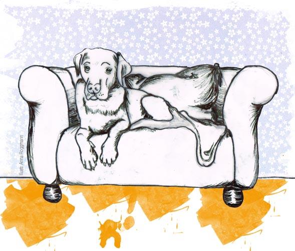 MyDog Sofa gesucht