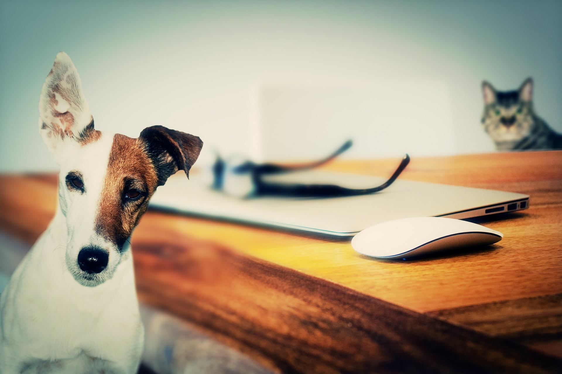 Hundebücher Pixabay