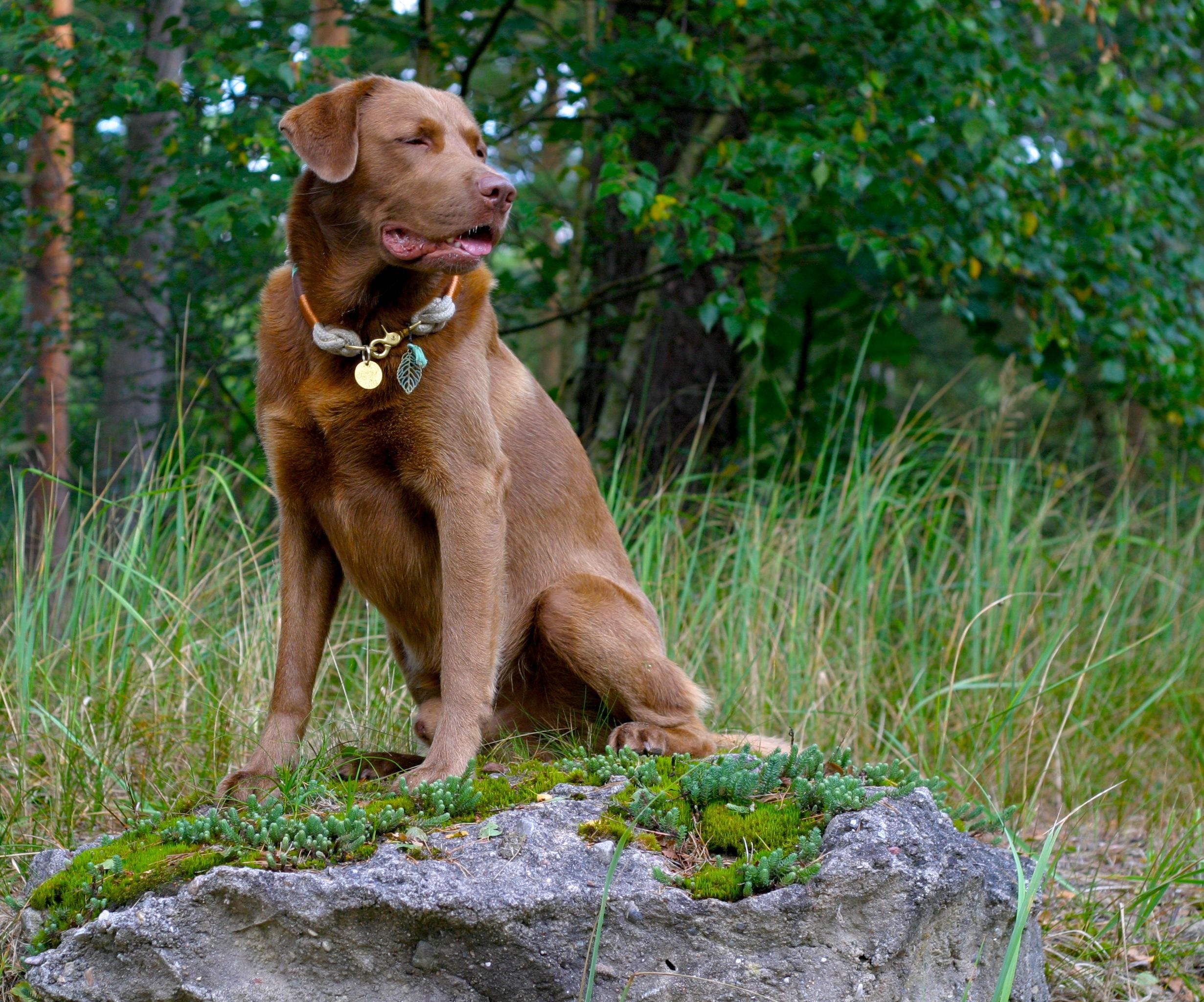 Kopfmensch Bauchhund