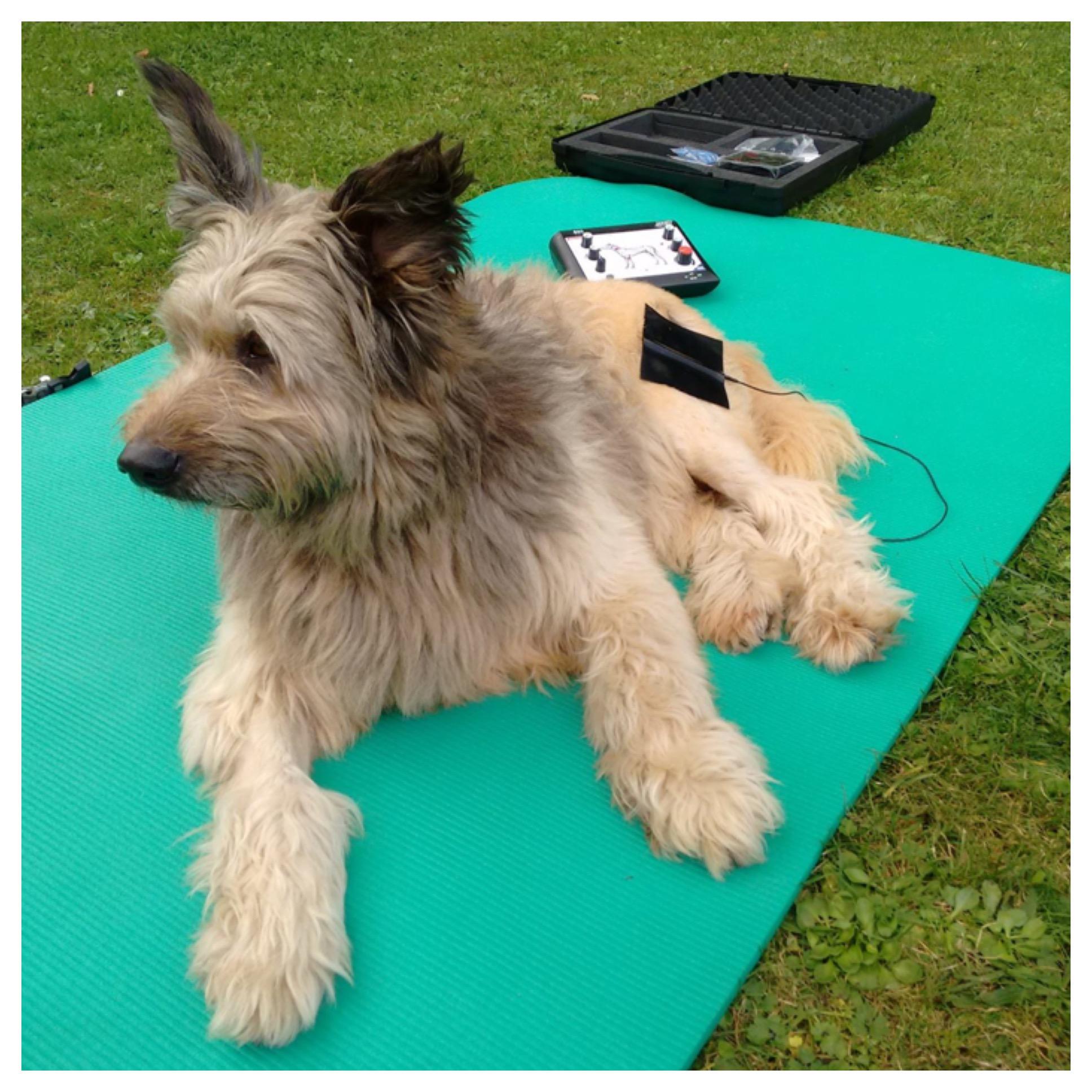 Hundephysiotherapie