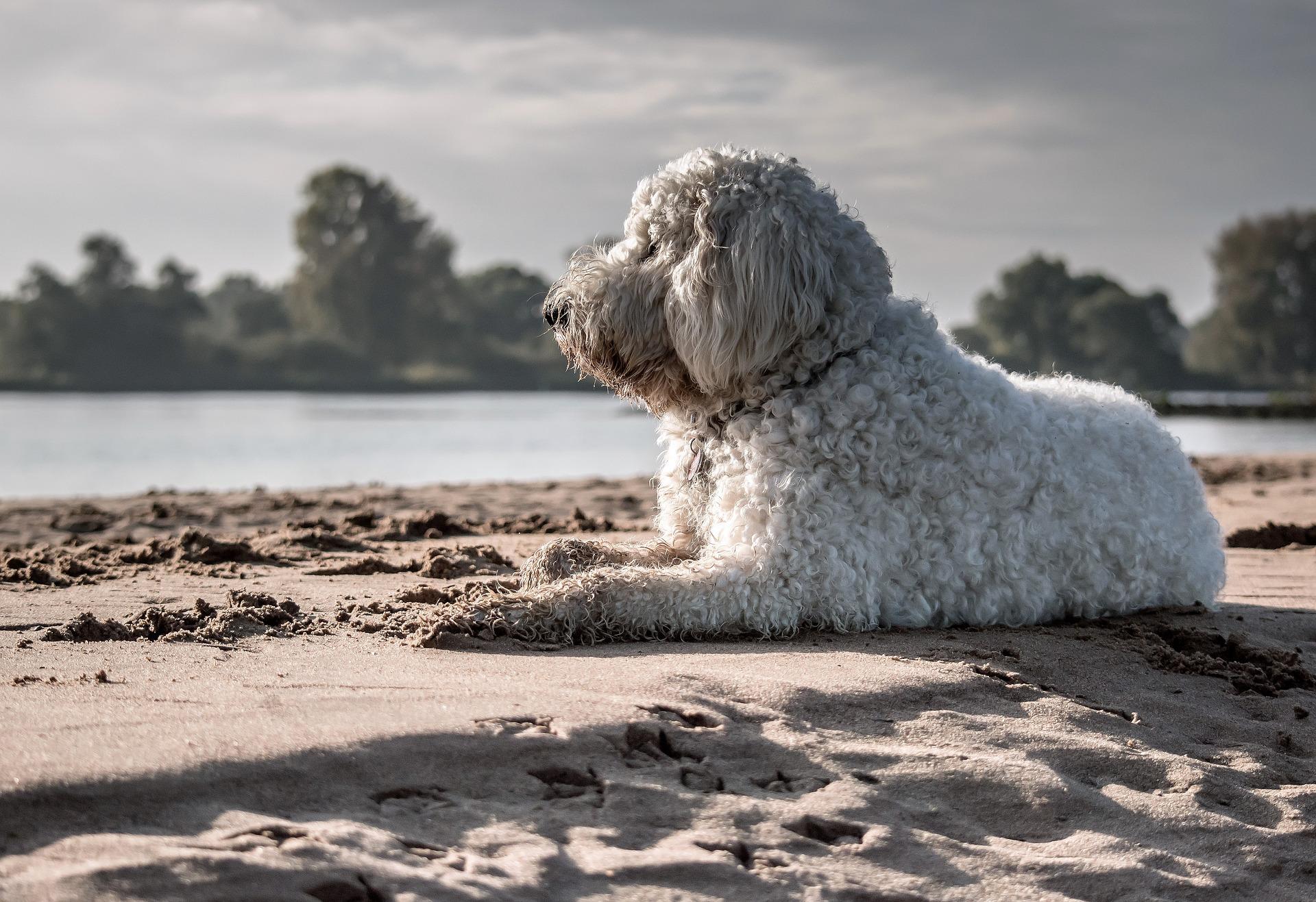 Hundestrand Pixabay