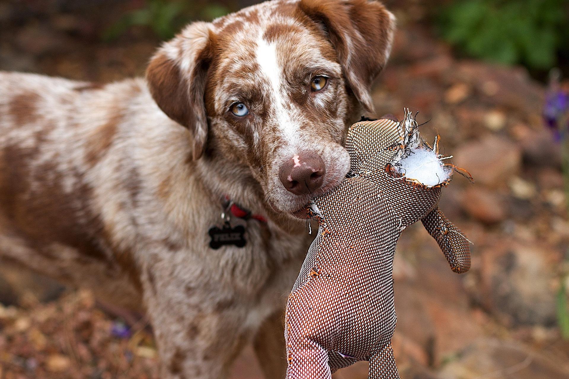 tierschutzhund pixabay