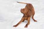 Hund humpelt_Pixabay